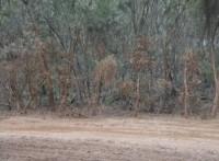 Deans Mud